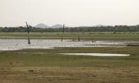 Birds_at_the_Minneriya-Giritale_National_Park.jpg
