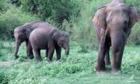 minneriya-national-park-elephants.jpg