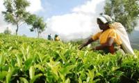 india-tea-estates-9.jpg