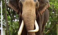 Elephant-1141x1600.jpg