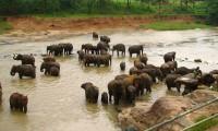 Sri_Lanka_Elephant_Orphanage.jpg