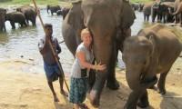 pinnawala-elephant-orphanage.jpg